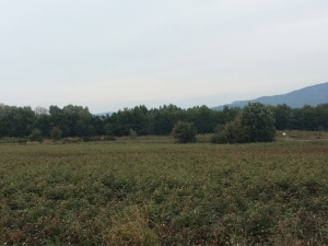 Reflecting back on the farmland and olive orchards of Greece
