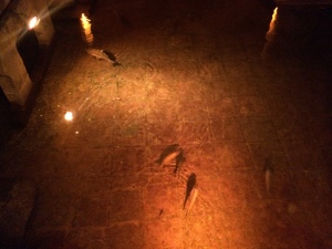 Fish in the old Roman Basilica Cistern in Istanbul (Oct, 2014)